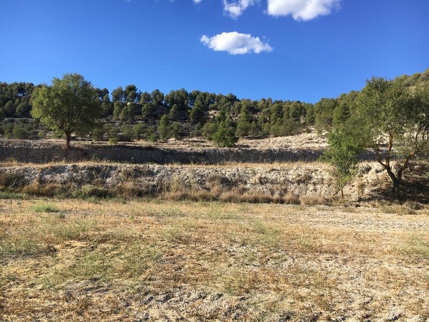Masía-rústica-en-venta-en-la-Fuente-roja-Terrenos-agrícolas