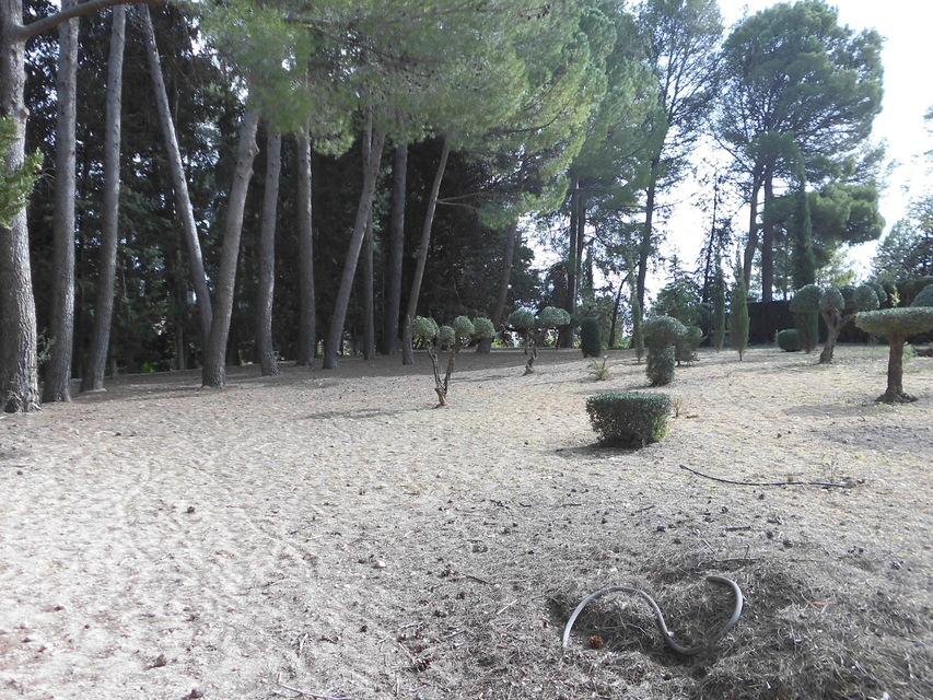Casa-de-recreo-en-Muro-de-Alcoy-pinada