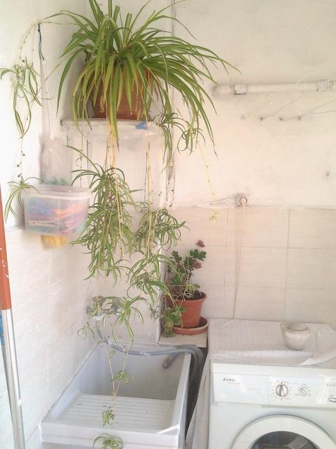 Gran vivienda para reformar en Ensanche-lavanderia 2