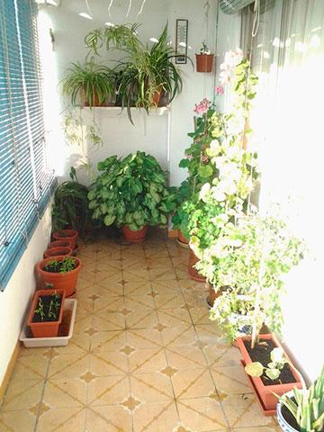 Gran vivienda para reformar en Ensanche-patio