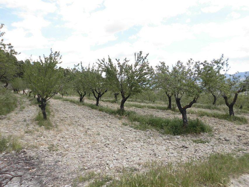 Masía-agrícola-en-Peñíscola-almendros