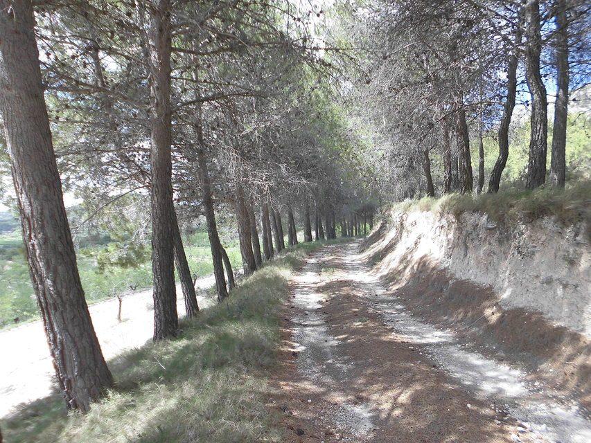 Masía-agrícola-en-Peñíscola-camino