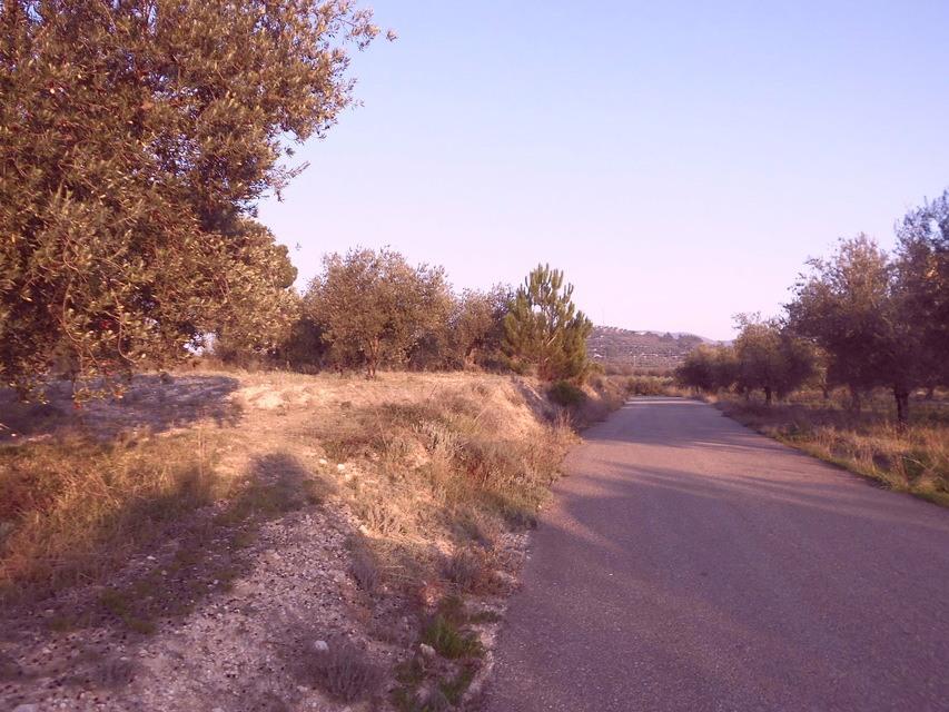 Masía-agrícola-en-la-Alcudia-camino