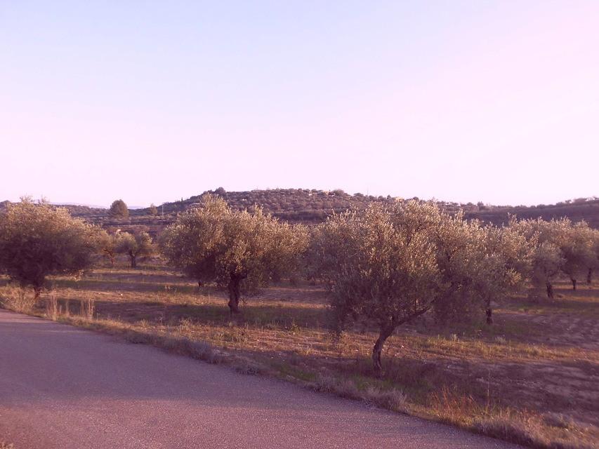Masía-agrícola-en-la-Alcudia-terreno-1