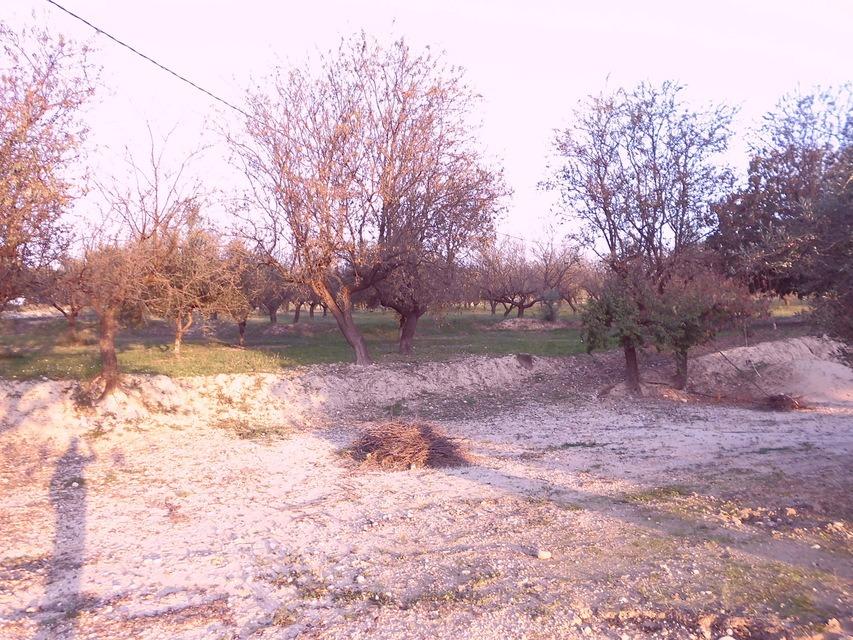 Masía-agrícola-en-la-Alcudia-terreno-2
