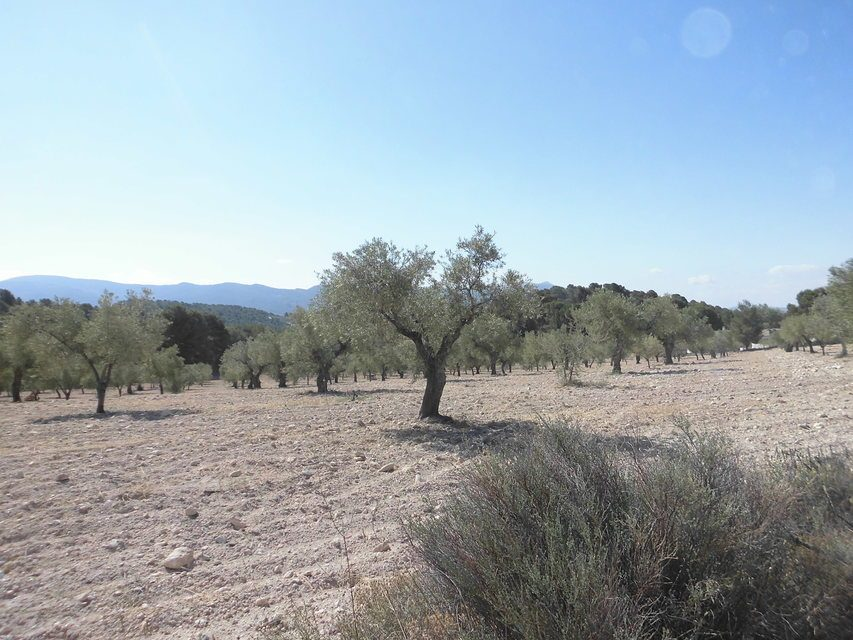 Masía-con-terreno-en-Onil-olivos