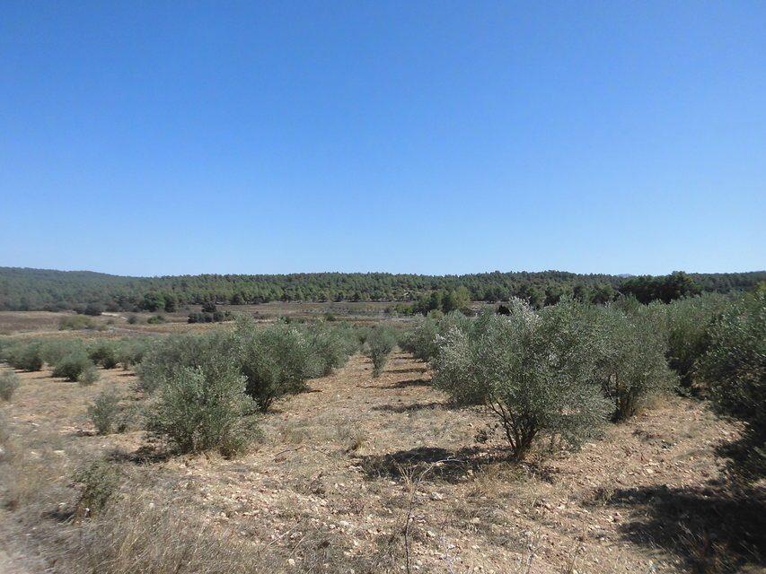 Masía-rústica-en-venta-en-Mariola-Terreno-olivos