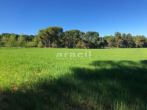 Masía agrícola de grandes dimensiones a la venta en Mariola. - Vistas 4